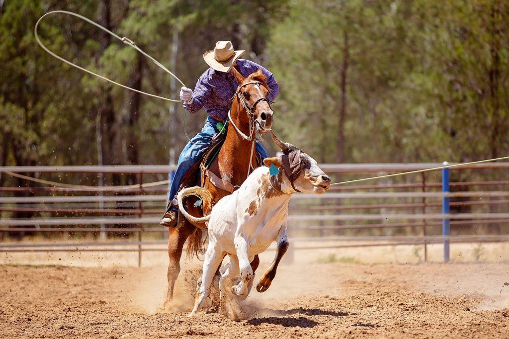 A cowboy riding a horse
